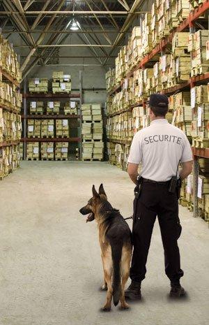 agent cynophile de securite