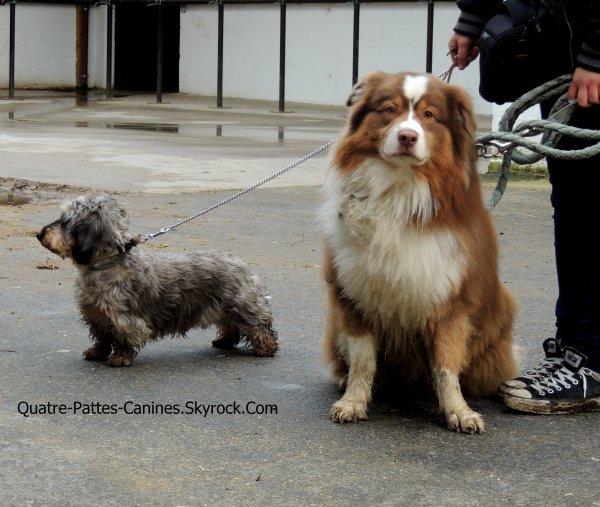 Bienvenue sur Quatre-Pattes-Canines !