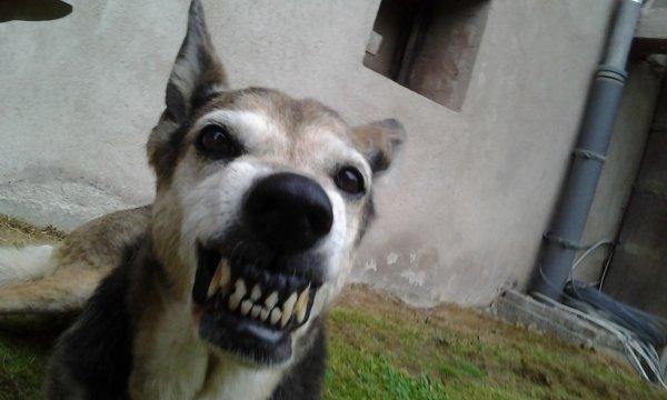 mon chien lol