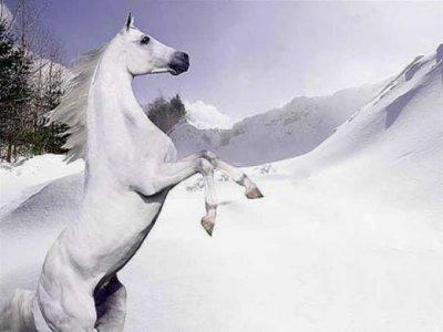 j'adore  aussi les chevaux