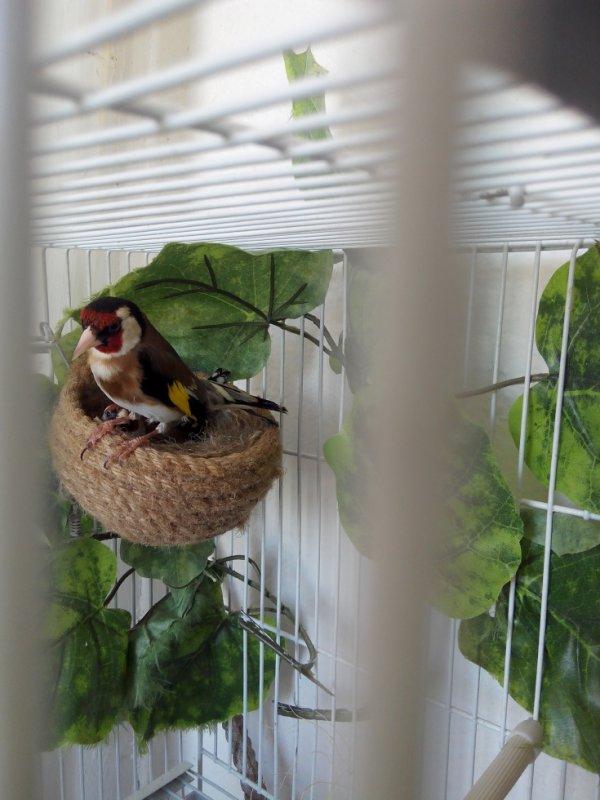 Un beau couple parva dans mon balcon :)