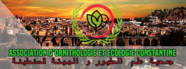 ASSOCIATION ORNITHOLOGIQUE ET ECOLOGIQUE CONSTANTINE