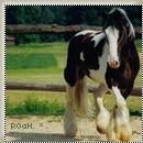 Photo de Rustle-0f-a-Horse