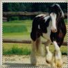 Rustle-0f-a-Horse