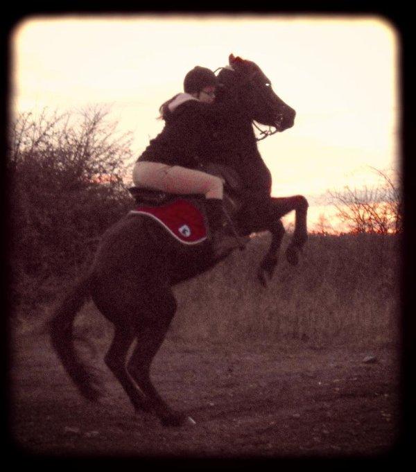 """""""On s'accorde à dire la beauté singulière d'un cavalier et sa monture. Cette image conjugue la grâce, l'élégance, la race qui lui donne sa haute noblesse. ♥"""
