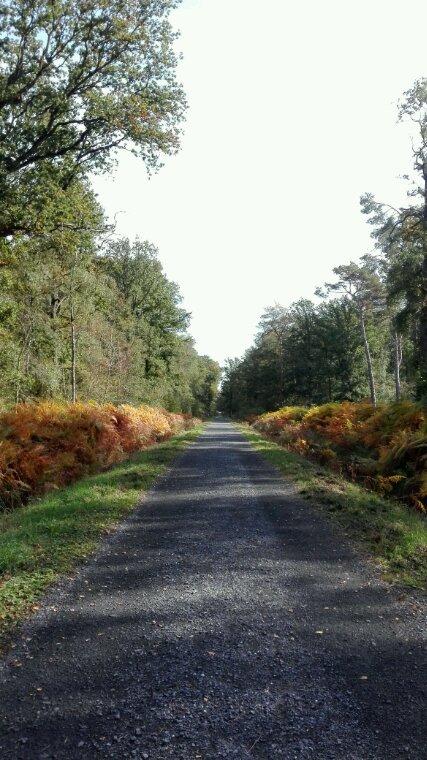 Une balade dans les bois, les odeurs, les couleurs, les bruits... La belle compagnie ♥ Douce vie, nature apaisante...