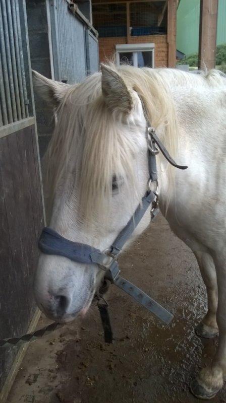 mon poney pref <3