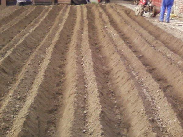 Plantation des pomme de terre!!!!