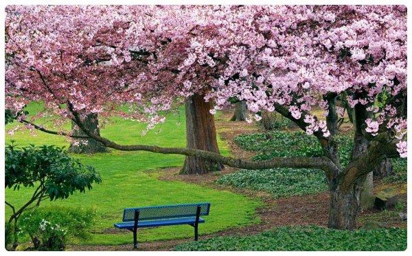 Sondage pour le thème de mai 2013 : la nature