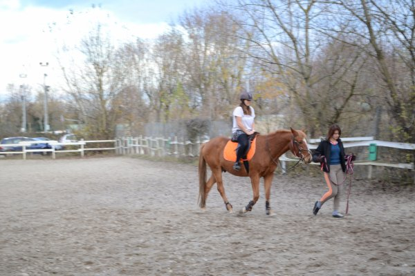 Séance du 20/11/11 travail en carrière sur le galop et initiation au cheval pour Amandine :)