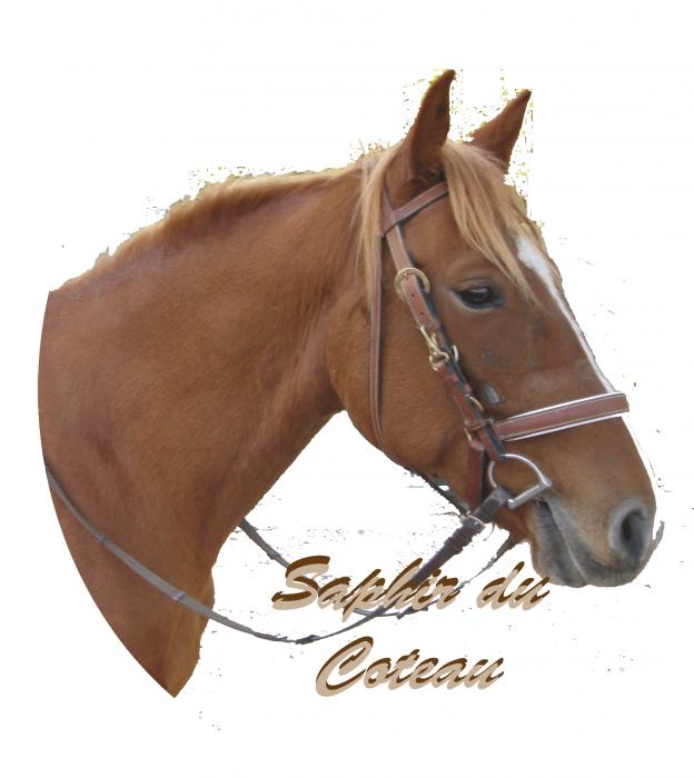 Saphir du Coteau, mon cheval