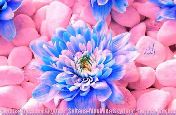 ✻ SULTANA-MUSLiiMA ( . . . ) MARiÉE A SEN MEKTOUB EL HAMDOULiiLEH ♥ - - L'Envoyé d'Allâh (paix et bénédictions sur lui) dans un hadith parle de celui qui insulte ses parents. Les compagnons (qu'Allah les agrées) présents s'étonnèrent et demandèrent comment un musulman peut insulter ses parents. Le Prophète (paix et bénédictions sur lui) répondit : « En insultant les parents des autres. » (Rapporté par Muslim).- - Allah Ou Akbar : الله أَكْبَر ( . . . ) - -