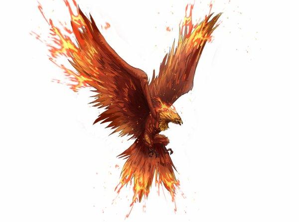 Fin Juin 2016 dbut juillet 2016 -changement ou  petit retour à la normale -Phoenix 2016