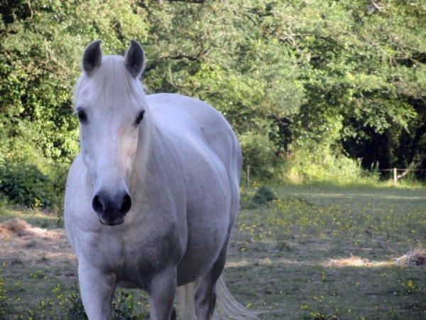 - L'amour entre cheval et cavalier ne s'explique pas.