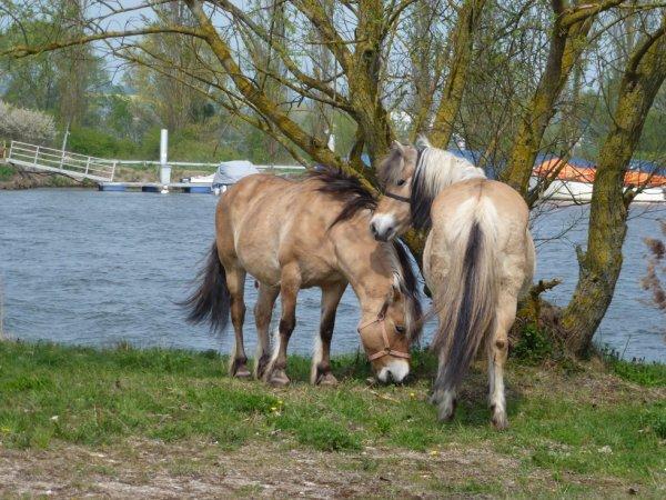 le respect du cheval, c'est la fondation de la liberté ( Alexis Gruss)