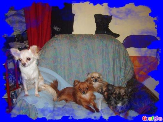 4 chichis :)
