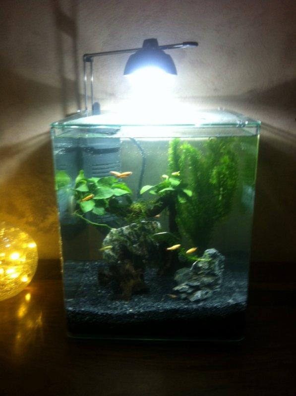 Aquarium !