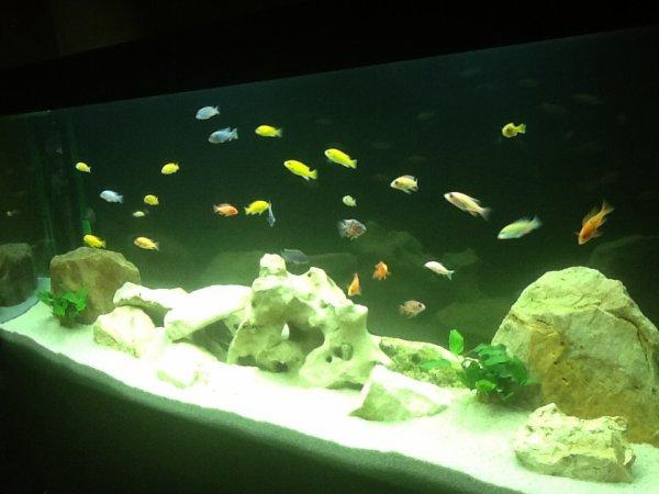 Aquarium suite