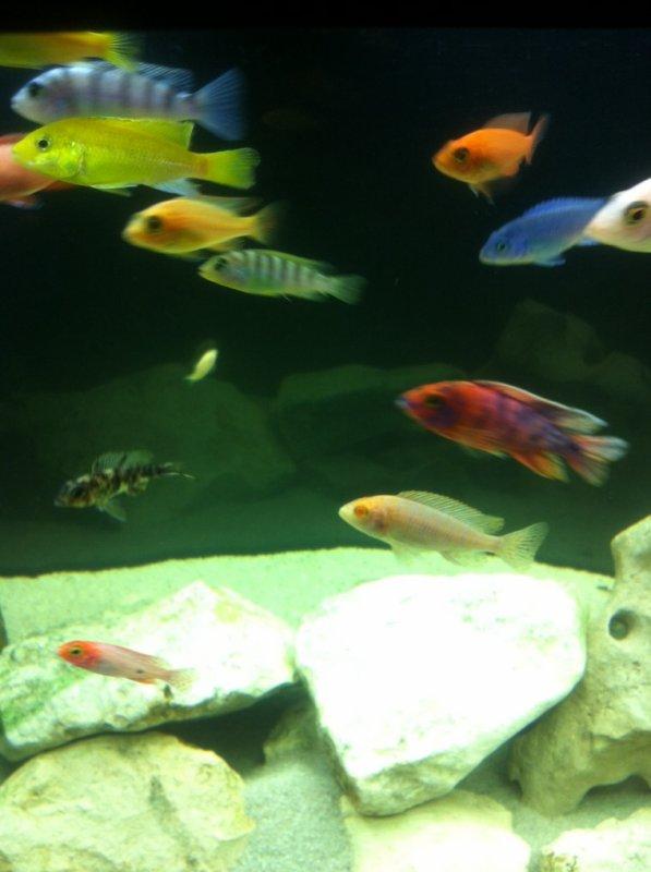Aquarium ! Suite !