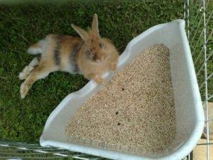 Comment accueillir un lapin chez soi ? (la suite)