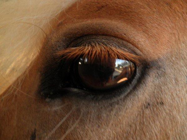 """"""" Je vois parfois dans le regard d'un cheval le beauté inhumaine d'un monde avant le passages des hommes """""""