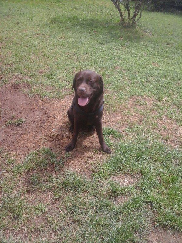 Mon gros chien d'amour ♥