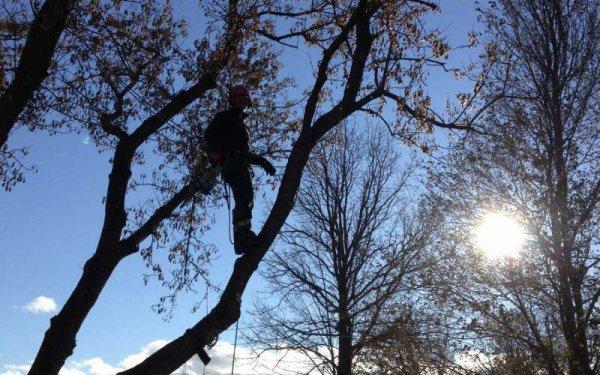 emergency tree service in Peterborough, ON