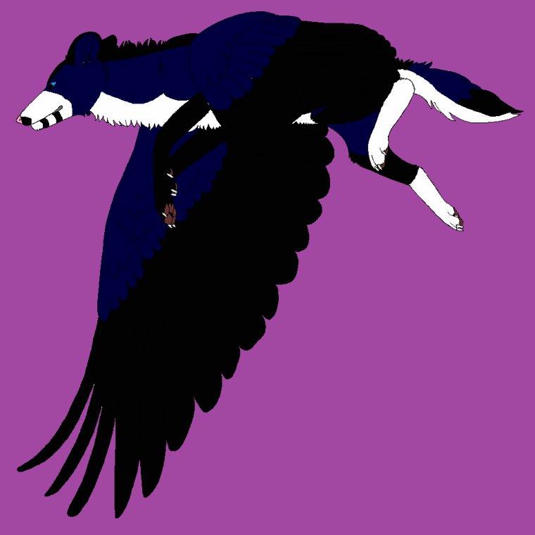 Angel Nyméria