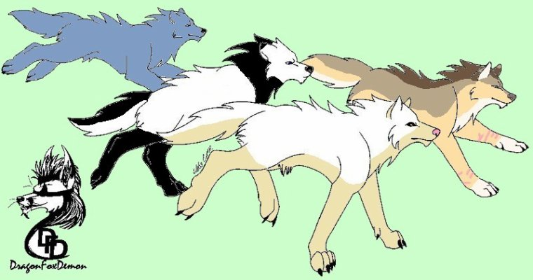 En meute (Nyméria(moi), Lerya, Yankumi et Sapphire)