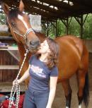 Photo de horseswings