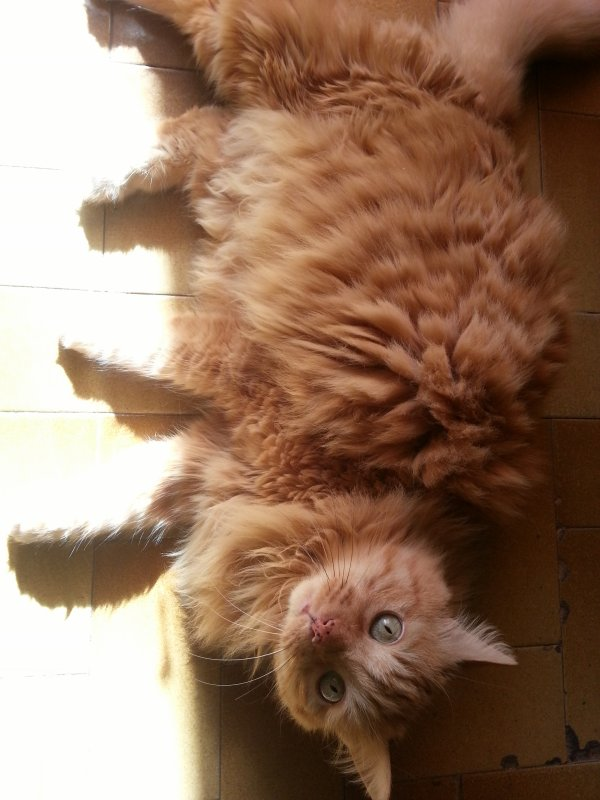 Une passion des chats :3