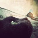 Photo de Un-Baiser-de-Papillon