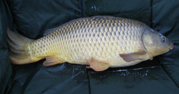 7 kilo 500