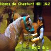 Haras-Chestunt-Hill1-2