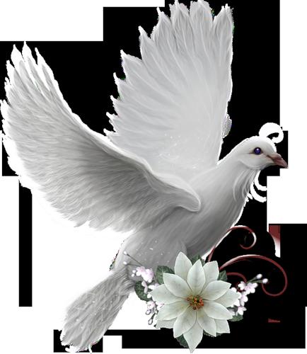 Je t 39 envoie par cette colombe blanche charme - Le petit jardin wittenberge colombes ...