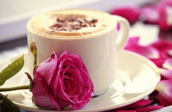 ***superbe rose***