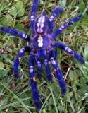 Photo de spiderboy92