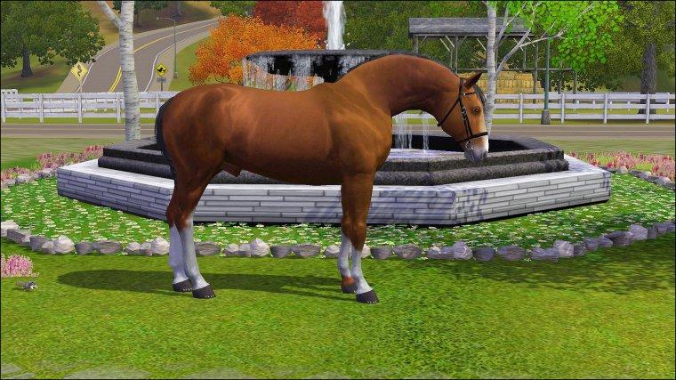 Nos chevaux :