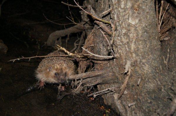 un visiteur nocturne!!
