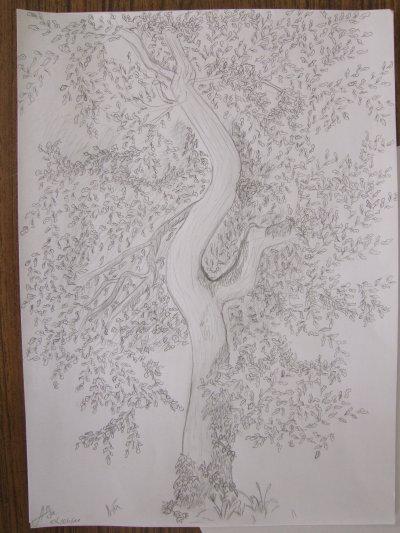 le chêne de la reine