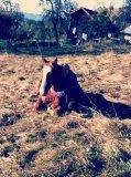 Photo de Lou-Horse