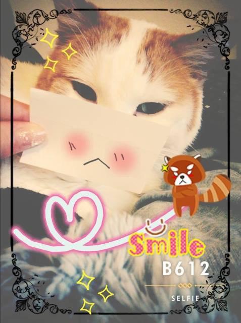 x 私が欲しいです![My Cute cat] ~ x