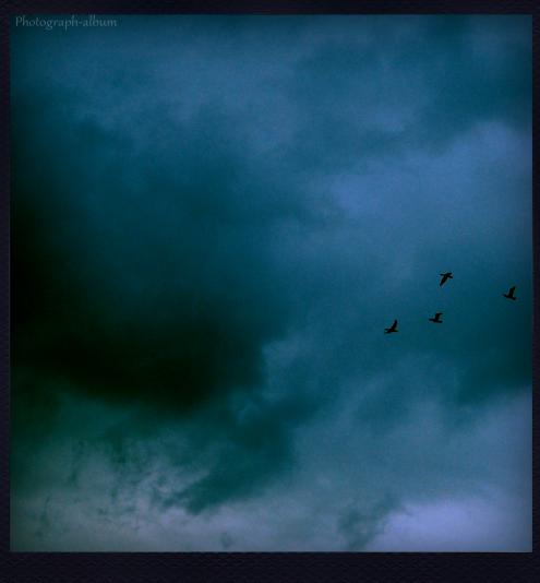 Song bird .