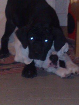 Rocco & Farah