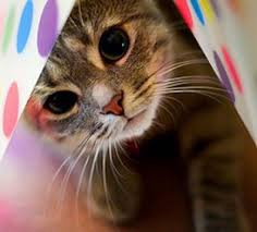 Je crois que je viens de faire une crise de lover de chat.@~@