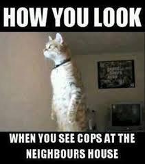 traduction: A quoi tu ressembles quand tu vois la police chez ton voisin. X'D