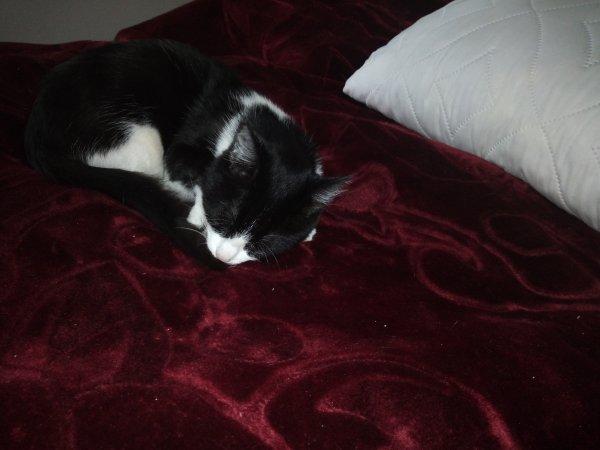 Mon beau chat Élégant