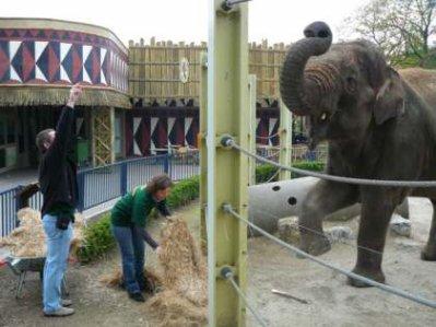 Devenez un Zoo Keeper Junior pour 1 jour !