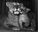 Photo de sauvons-les-animaux