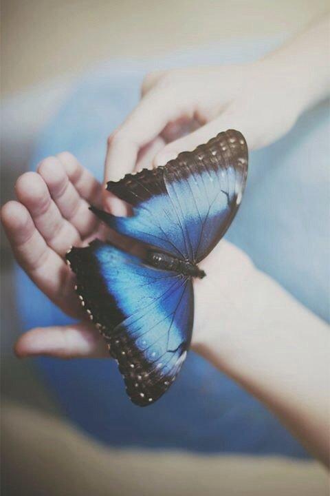 Oui, tu veux partir, découvrir le monde, mais même les papillons ont besoin de temps avant de prendre leur envol